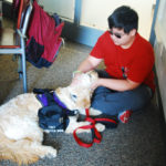 Service dog arrives to the classroom